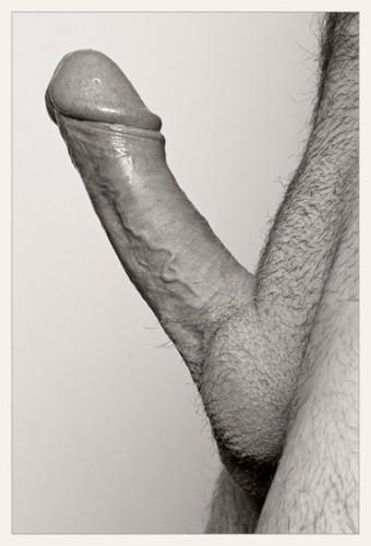 Fotos de rola grande dura